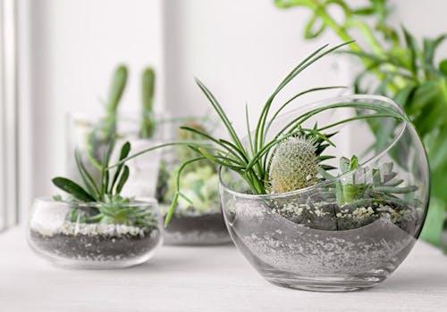 Several bowls of happy, green succulents
