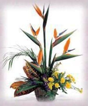 Tropical Bird of Paradise Design