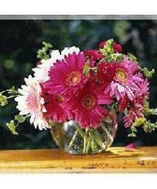 Delightful Vase of Fresh Cut Gerber Daisies