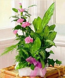 Assorted Green Plants with Pink Flowers Added