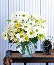 Simply Fresh Cut Vased Daisies
