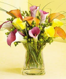 Dozen Petite Calla Lillies