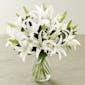 Vased Casablanca Lilies